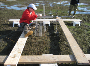 Coastal Ecologist Marci Cole