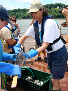Margie Turrin- Science Education Coordinator at Lamont-Doherty Earth Observatory