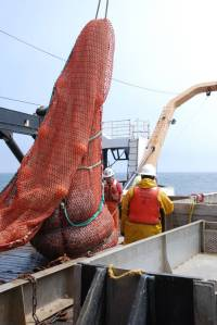 The trawl net sits on the deck of the Miller Freeman and is ready to be weighed and measured.
