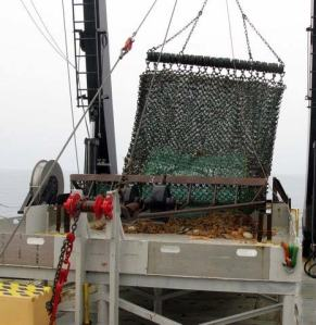 The dredge is hoisted to the sorting table