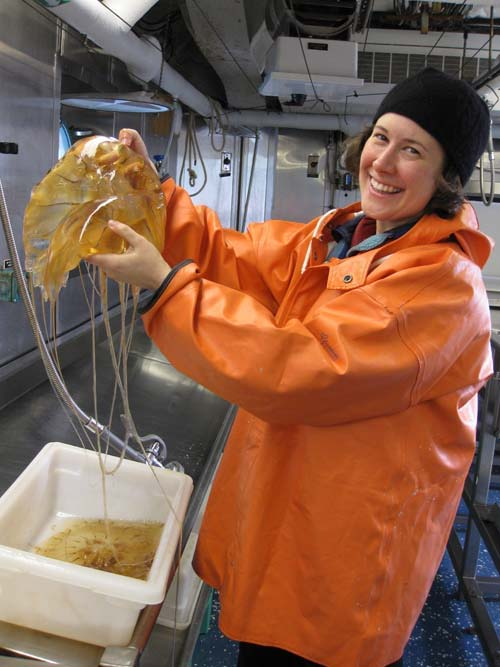 Here I am holding up a Chrysaora melanaster jelly fish (Luckily this species doesn't sting!)