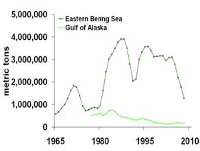 A graph showing the adult walleye pollock biomass estimates from 1965 to 2008.