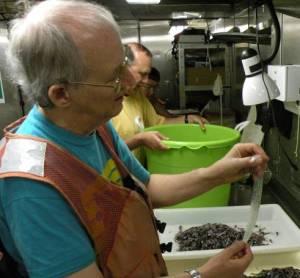 Scientist Bruce Mundy with eel larva