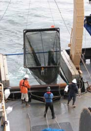 The survey tech and skilled fishermen lower the Methot net into the water.