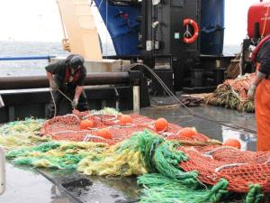 Hauling in the net