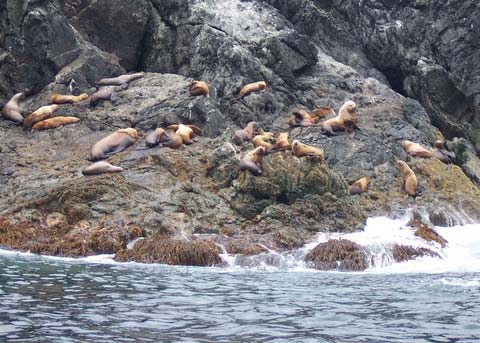 A colony of Steller sea lions lies on jagged rocks in the Arriaga Passage.