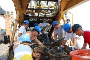 Scientists and volunteers sort dredge materials.