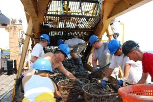 Scientists and volunteers sort dredge materials.