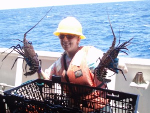 "Teacher at Sea Maggie Flanagan holds spiny lobsters while ""cracking"" – recovering lobsters from traps."