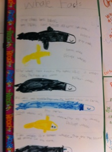 Whale Sizes by the first graders at Bell Top School.