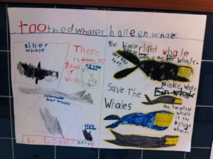 Categorizing toothed and baleen whales by the first graders at Bell Top School