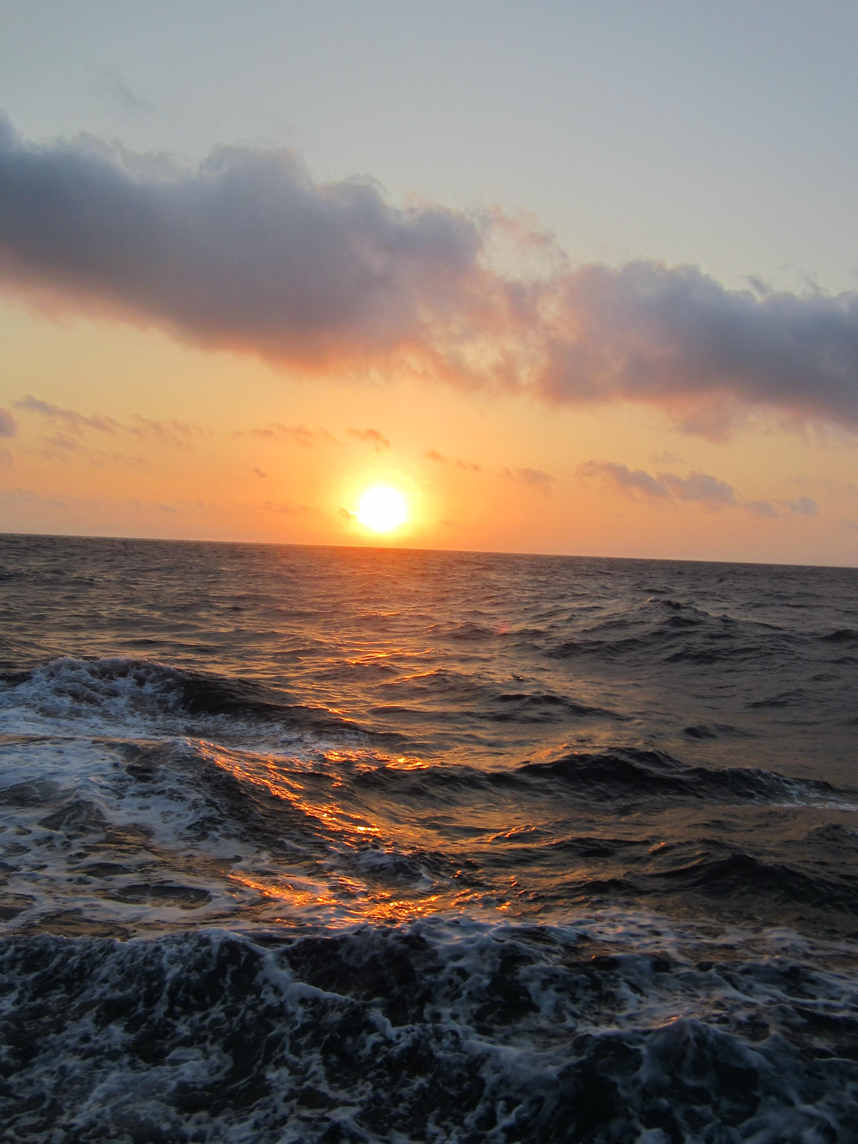 Sargasm Nudibranch Noaa Teacher At Sea Blog