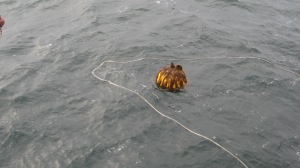 Recovering a mooring with a rope lasso