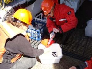 Beth Lancaster (right) preserves a plankton sample collected using a hoop net.