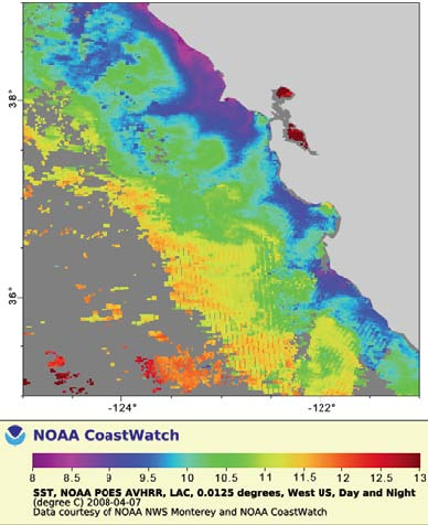 Reported sea surface temperatures from April 7, 2008 for coastal California from satellite data.  The coastal wind did in fact cause an upwelling and cooling of water along the coast.  The purple area indicates temperatures 8-8.5oC and the blue 8.6-10oC.