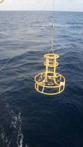 "A ""rosette"" is used to hold the instrumentation for the CTD.  Here we see the rosette being lowered down into the water column by way of a crane mounted on the GORDON GUNTER."
