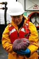 Tom Letessier holds a sea urchin fully inflated with water.