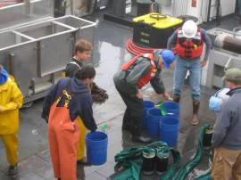 All the blue buckets contain various organisms