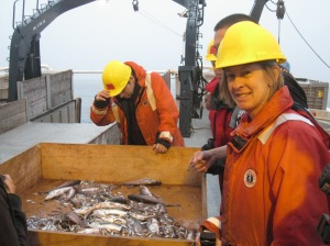 deep water trawl haul