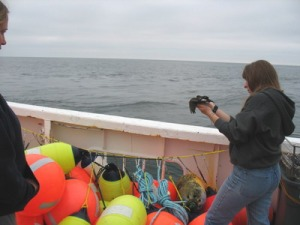 Karin releases a petrel from nets he flew into.