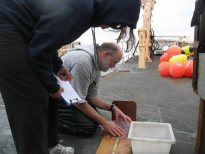 Scott measures a moon jelly as Amy records data.