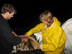 Randy and Mary Anne cleaning Humboldt Squid.