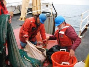 Chico Gomez and Scott Benson sorting jellies.