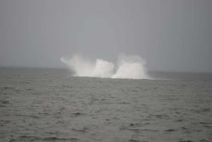Then I got these shots, which shows a whale breaching (jumping out of) the water.