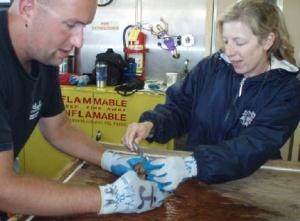 NOAA Teacher at Sea Maggie Flanagan measures a lobster carapace.