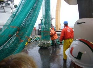 This is the net used for deep bottom trawling that has the yellow floats attached to it.