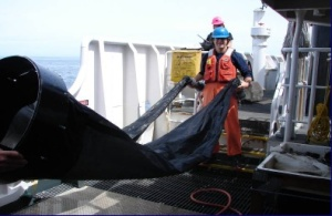 NOAA TAS Scott Donnelly ready to deploy a bongo net