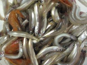 shrimp and smelt