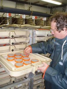 Brad Weinlaeder showing the incubation trays for the salmon eggs at the Biological Field Station at Little Port Walter.