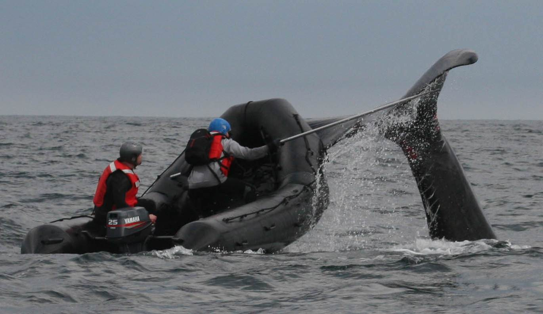 Watch shifts noaa teacher at sea blog for Fishing jobs in florida