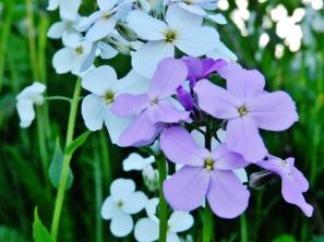 Blooming flowers in Juneau