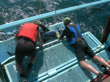 Russ Vetter and Rand Rasmussen position a blue shark so  they can measure its length and remove the hook.