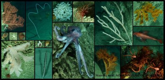 Image Highlights taken using TowCam during the Canyons CSI research expedition.
