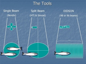 Comparison of different types of sonar.