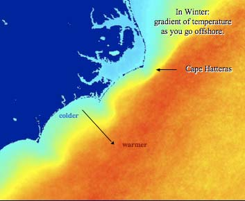 Gulf Stream winter temperature gradient for Onslow Bay, NC.