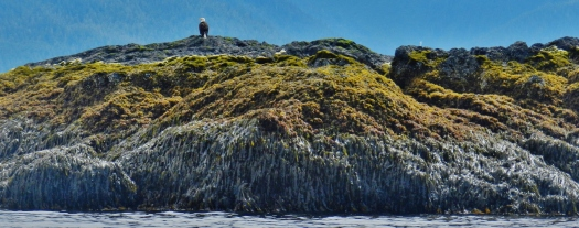 Only the highest point of this 150-meter-wide rock remains above the water line at high tide.