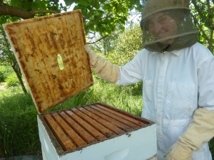 Checking on the bees