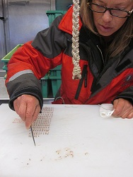 Sorting krill and jellyfish