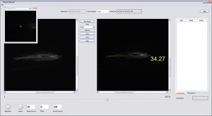 The stereo camera data is input into measuring software, which calculates  the length of the fish in cm.  Screen shot provided by NOAA.