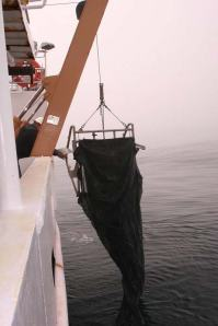 Deployment of the Tucker Trawl enables researchers to sample zooplankton at various depths. The cod ends of each of the three nets have been tied with white rope and are visible in the right-hand photo graph.