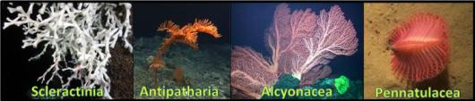 The Four Orders of Corals.