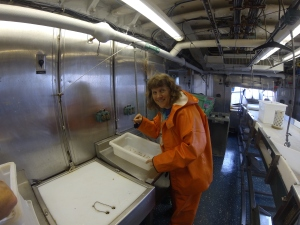 Counting krill