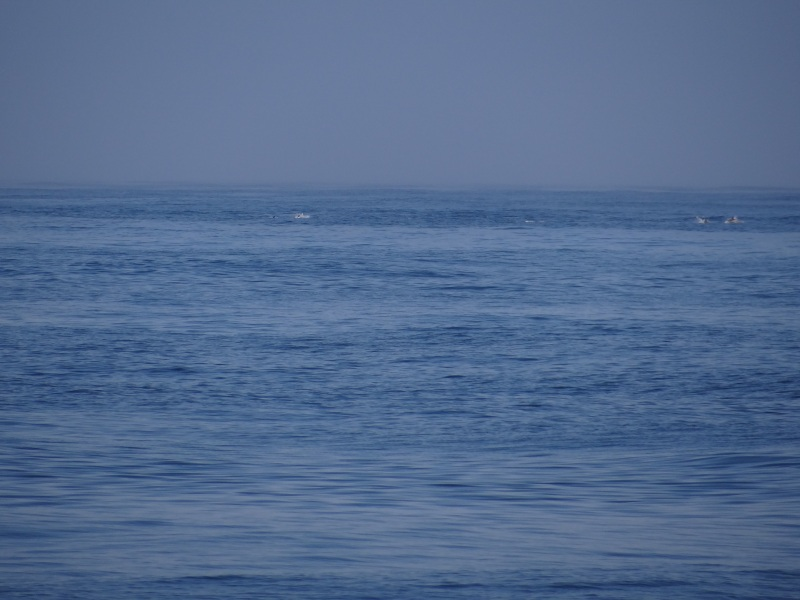 Whales in the Background