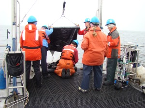 Tucker trawl collects krill at depth.