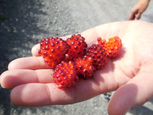 Delicate Salmonberries