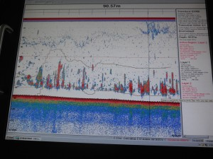 """The above picture shows a computer screen with dense red """"backscatter"""" characteristic of large amount of fish. The yellow lines above and below the backscatter show the location of the trawl lines."""